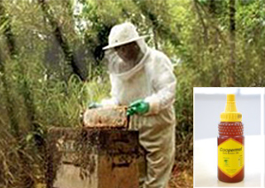 CENIBRA: Beekeeping activities and honey produced in the forest
